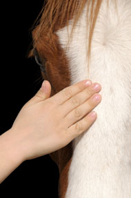 Patting a horse